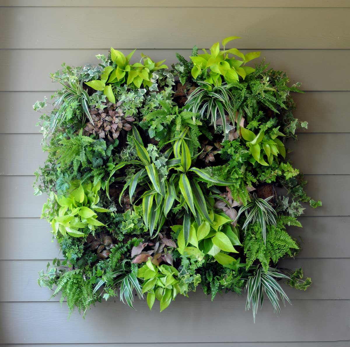 Charming Vertical Gardens In Darwin And Casuarina