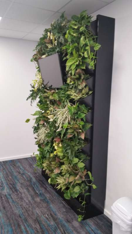 Vertical garden ageless mens health