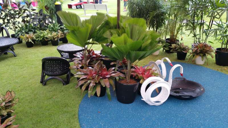 Plant Display Bridgestone