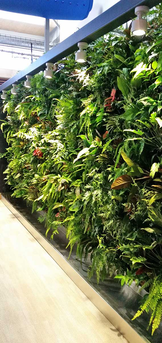 Vertical Garden in charles Darwin University