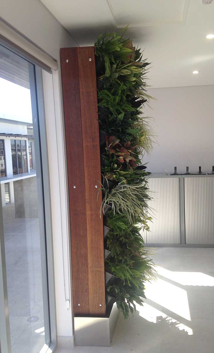 Vertical Gardens in Darwin and Casuarina