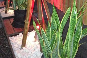 Plants for Functions & Events