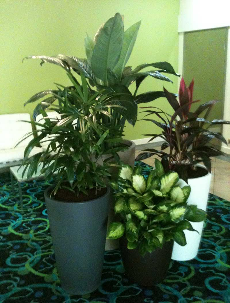 Hire plants for events and functions in Darwin