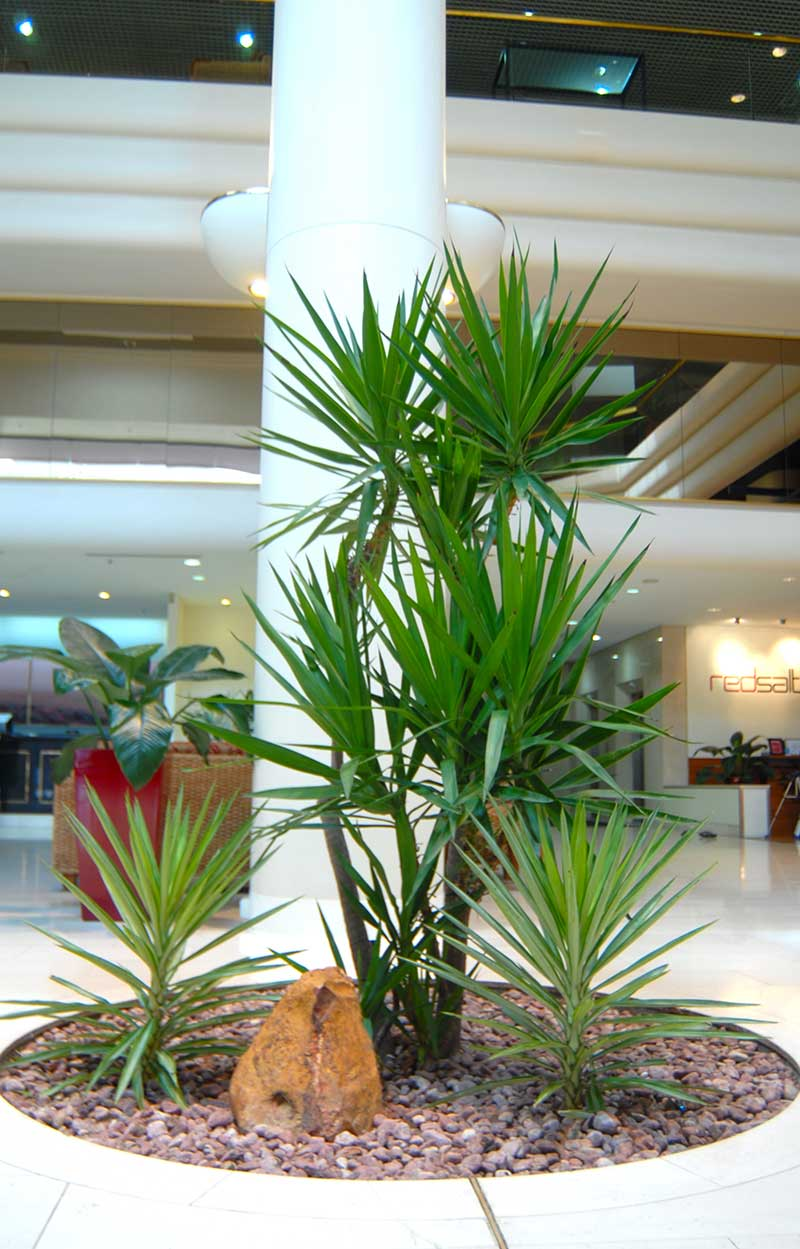 Indoor Plant Hire Darwin