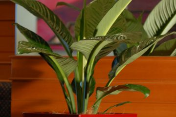 Indoor Plant Hire Darwin
