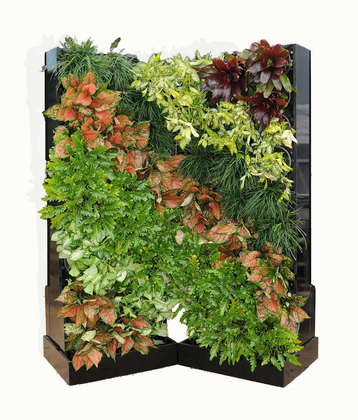 Hire Vertical Gardens in Darwin and Casuarina